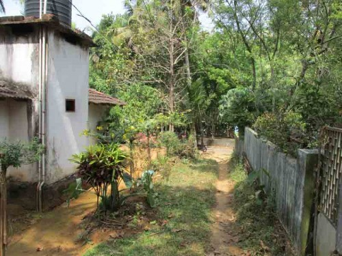 3 30 Acre Rubber Plantation For Sale At Manjapra Angamaly