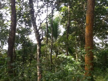 15 Acre Residential Land for sale at Kalpetta, Wayanad