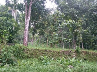 39 Cents water front Residential Land for sale at Bharananganam, Pala, Kottayam