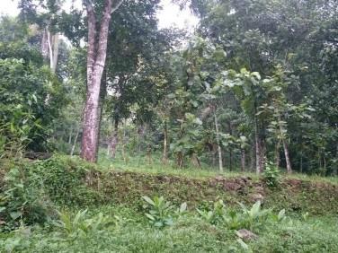 39 Cents water front Residential Land for sale at Bharananganam, Pala, Kottayam