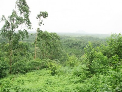 1.71 Acres of Beautiful Land for sale at Padinharethara,Wayanad.