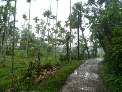 1 Acre 11 Cent Residential land for sale at Chalakudy,Thrissur.