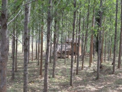 7 acre  land out of which 3 acre land is pattah land  for sale at Kovilkadavu, Idukki.
