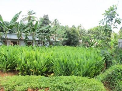 7 Cents of Plain Land for sale at Koovalloor, Kothamangalam,Ernakulam.