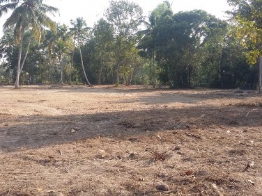 Flat 1.9 acre residential land near Kayamkulam, Kerala