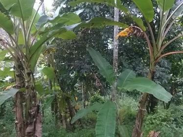 81 Cents of Pattayam Land for sale at Rajakkad,Idukki