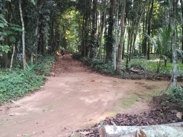 90 Cent Original Water Frontage Land For Sale at Piravom, Ernakulam