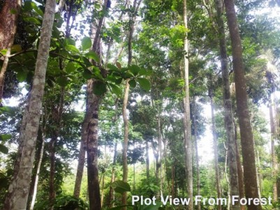 50 Cent Forest View Plot for sale Near Sultan Bathery,Wayanad.