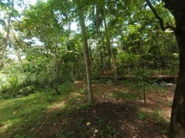 77 cents of land for sale at Peroorkada, Thiruvananthapuram 2.5 lakhs