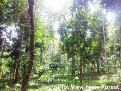 50 Cent Forest View Plot for Sale at Sulthan Bathery, Wayanad
