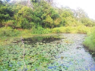 83 Cent Land for sale at Dasanakkara,Mananthavady,Wayanad.