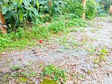 Land with House for Sale at Kenichira, Wayanad