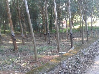 24 cent plot for sale in ayoor just 1.75 lakh