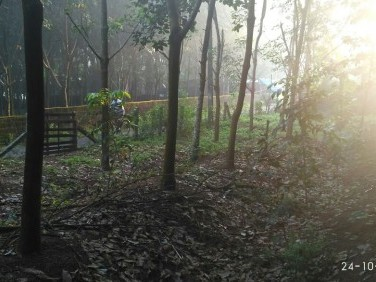 60 Cent Square plot for Sale at Charummoodu, Alappuzha