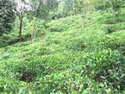 7.66 Acers Plantation with house for sale at Murinjapuzha – Kuttikkanam