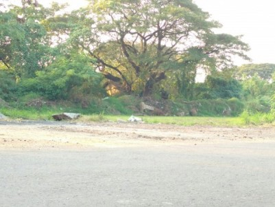 20 cents plot for sale in Thalashery-Coorg highway, 32nd Mile, Iritty, Kannur