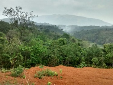 25 Cents of beautiful land for sale at Mananthavady,Wayanad.