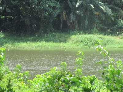 4 Acres Original land with150 feet River frontage Mavelikkara, Alappuzha.