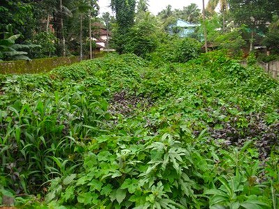 Residential Land for Sale at Heart of Perinthalmanna, Malappuram