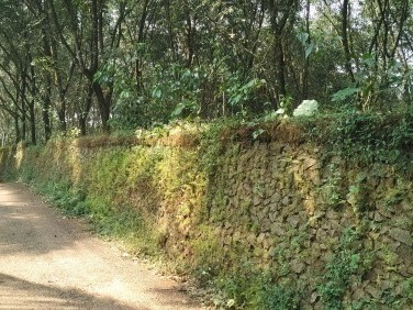 8 Acer Original House Plot For Sale at Piravom, Near Mulanthuruthy, Ernakulam