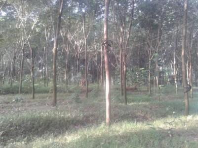 Residential Plot-62 Cent (Chengannur, Cheriyanadu Panchayat Alappuzha