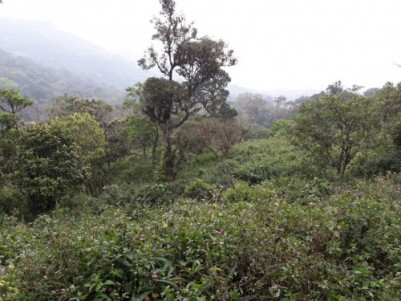 78cents of Residential land for sale at Anaviratty Munnar Idukki