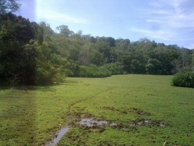 1.5 Acre Forest Boundary Land for sale Near Pulpally Town,Wayanad.