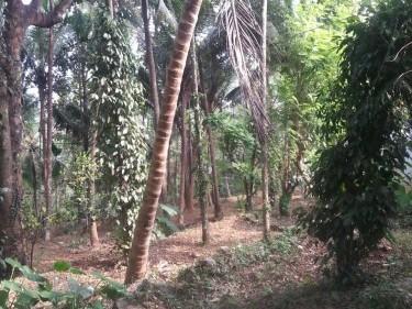 Malappuram Property