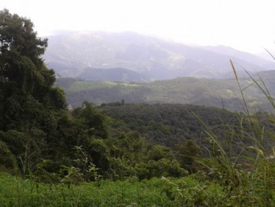 16.88 Acres of agricultural Land suitable for FARM TOURISM for sale on Vagamon-Mundakkayam Highway.