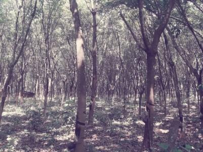 5 acre Rubber Plantation at Kalaketty, Kanjirapally