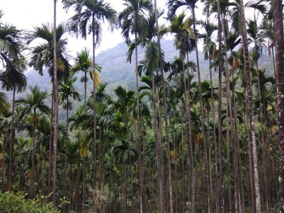37.5 Acres of yielding Areca nut plantations for sale at Nilambur, Malappuram