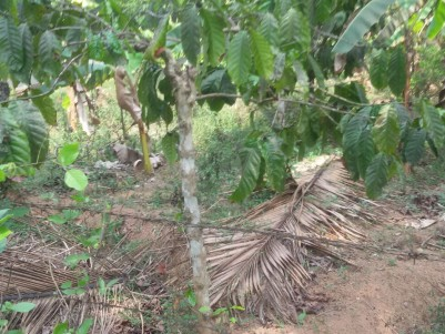 5 Acres of Residential land for sale at Mananthavady,Wayanad