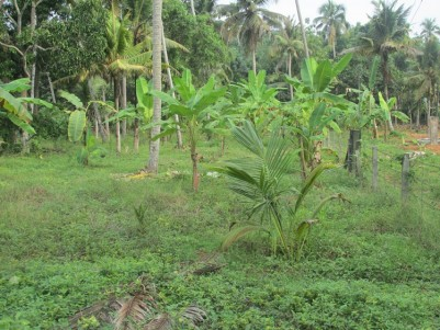 Water fontage land for sale at Kaduthuruthy, Kottayam