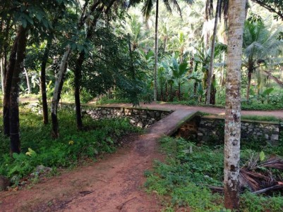 1 25 Acres Of Rubber Plantation For Sale At Kachani