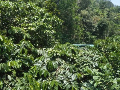 2 Acres of Agricultural land for sale at Mananthavady, Wayanad