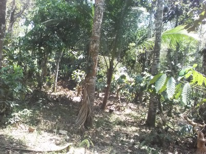 25 Cents of Residential land for sale at Sultan Bathery, Wayanad.
