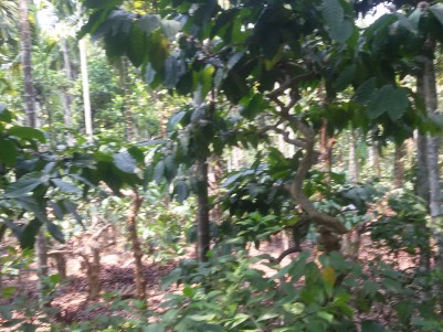 6 Acres of Multy crops  land for sale at Kalpetta,Wayanad.