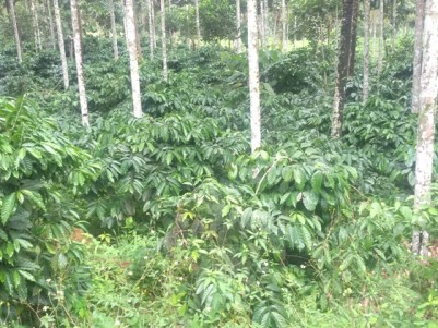 2.5 Acres of Coffee Plantation for Sale at Vythiri, Wayanad..