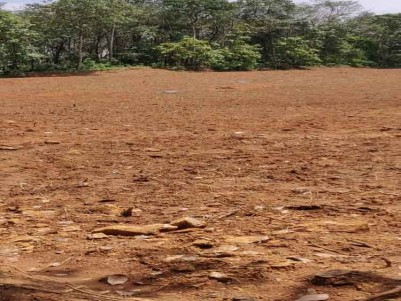 3.35 Acres of Land with Rubber Trees and Pineapple for Sale Near Nedumbasserry Airport, Angamaly.