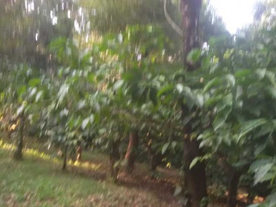 8 Acre Agricultural land for sale at Mananthavady, Wayanad