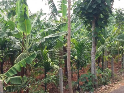 1.63 Acres of Residential plot for Sale near Ottappalam,Palakkad