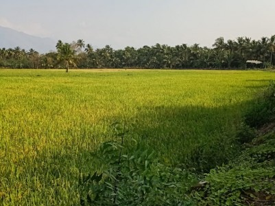 1 Acre Paddy Land for sale at Nallepilly, Chittur, Palakkad