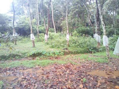 1 Acre Residential land for sale near Edappady,Pala,Kottyam
