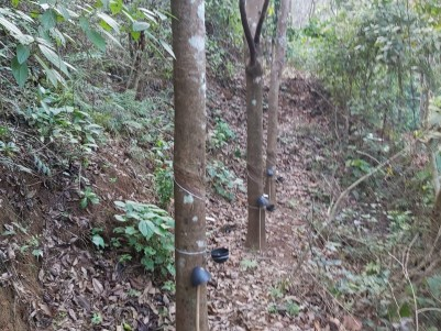 4 Acres Rubber Plantation and 1.70 Acre Agricultural Land for sale Near Murickassery Town, Idukki