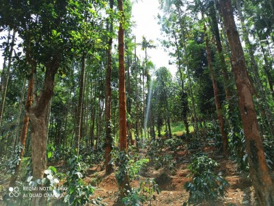 2.59 Acre Farm Land for Sale in Mananthavady, Wayanad - 50,000/Cent