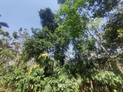 Coffee & Multi crop estate - up to 5 Acres along with contiguous paddy fields 1.5 acre to 5.3 acres.