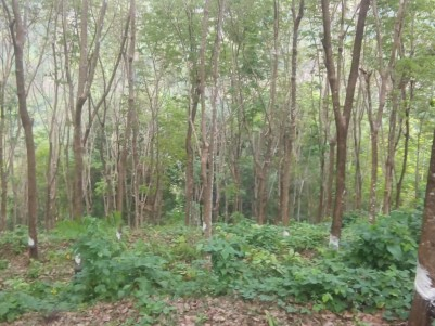 1 Acre Rubber plantation for sale near Chittar Town, Meenkuzhi, Pathanamthitta