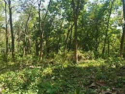 52 Cent of Original Land for sale at Thekkumala,near Koppam,Palakkad