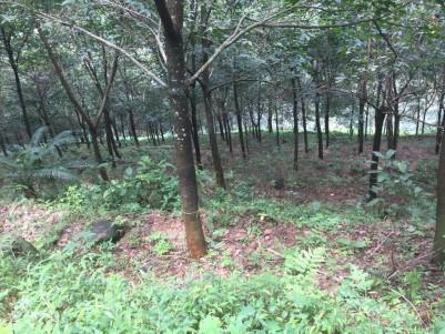 46 Acre Residential land for sale near Mundakkayam, Kottayam