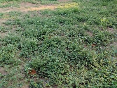 Sale 1045 Cents land near statute junction Tripunithura, Ernakulam